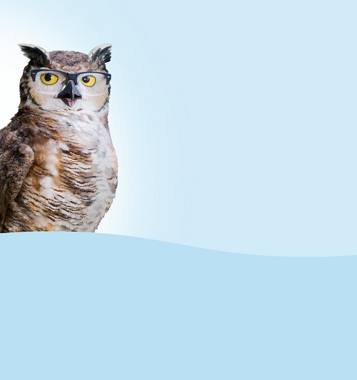 owl on blue background
