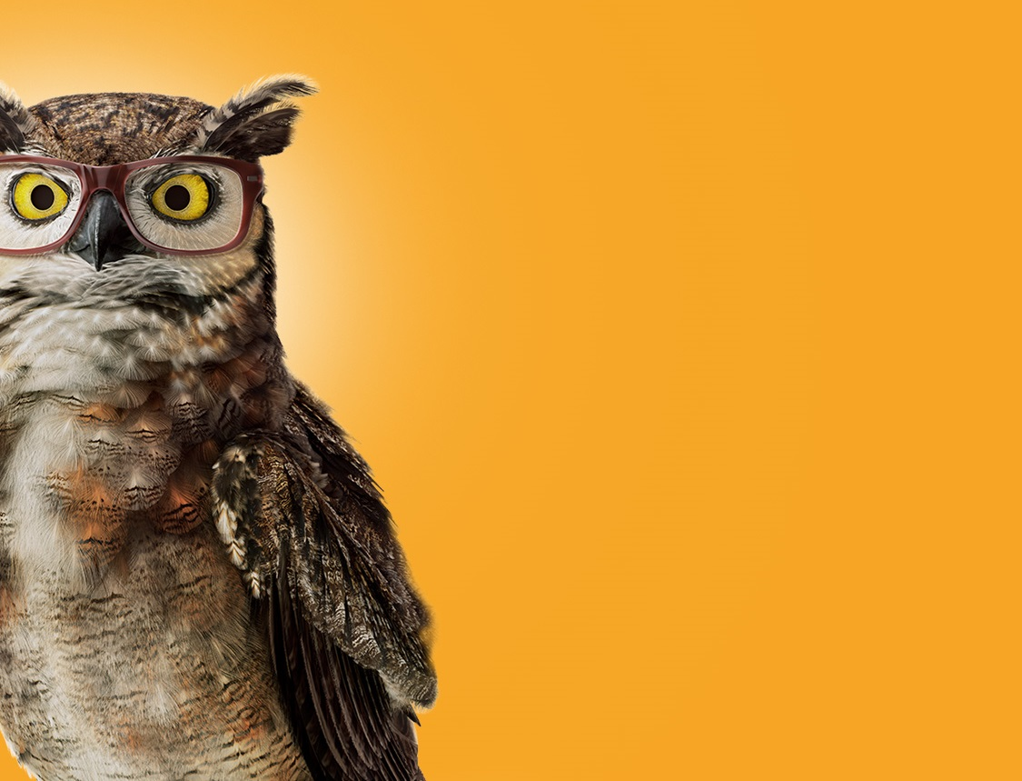 owl on yellow background